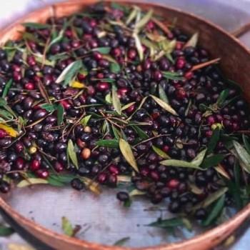 RFI : A l'origine, l'huile d'olive